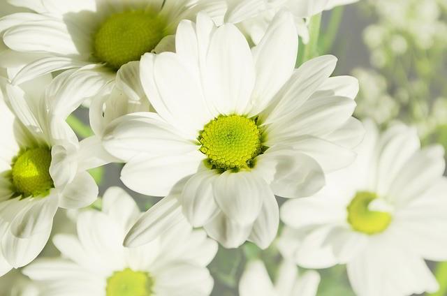 dekoracje slubne kwiaty